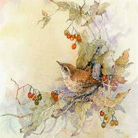 Anita Pegler - Watercolours