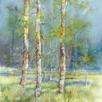 ap-spring-birches