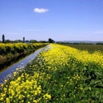 The river-Brue-in-flower